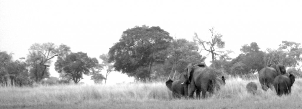 Botswana adventure. Trädtrolleri HB