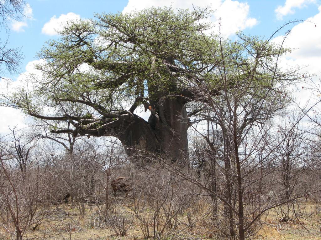 Nyheter, Botswana Adventure